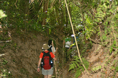 Aventura en la selva de Puerto Vallarta