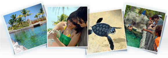 boatswains-beach-turtle-farm-cayman-photos