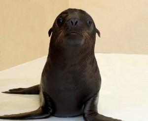 Dolphin Discovery, feliz por el nacimiento de un Lobo Marino en su locación  Riviera Maya