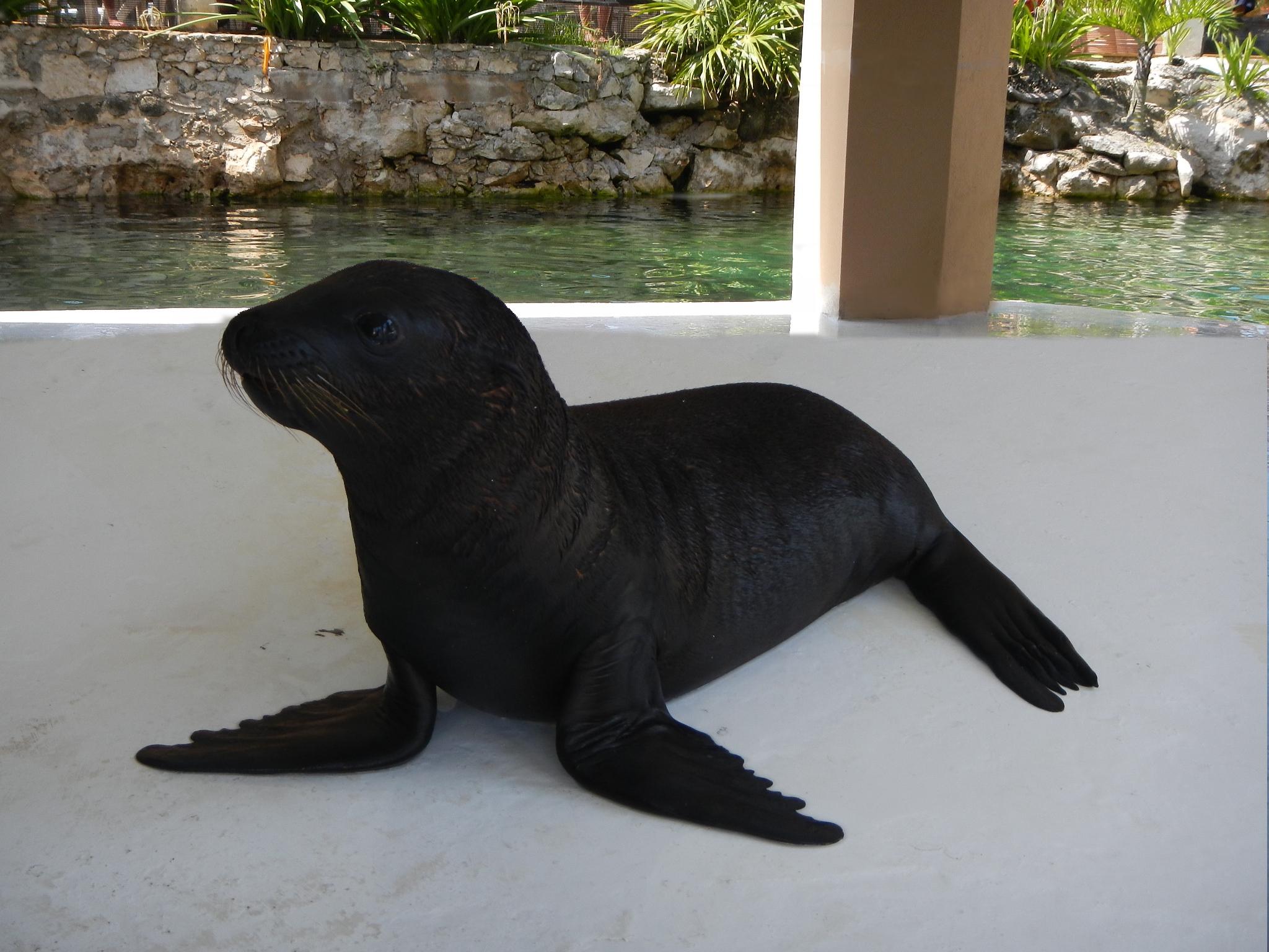 Lobos marinos | Nadar con Delfines