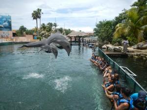 Miss Latina USA 2013 visitan Dolphin Discovery