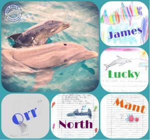 Y el nombre del Bebé de Dolphin Gran Caymán es…