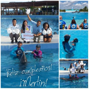collage_blog_dolphindiscovery