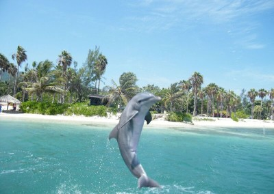 Dolphin Discovery Jamaica