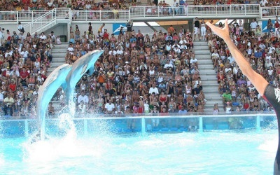 ¡Dolphin Discovery se expande!