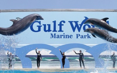 Damos la bienvenida al Parque Marino Gulf World