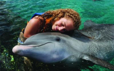 Delfines bajo cuidado humano