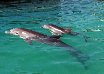 ¡Nace Bebé Delfín en Dolphin Discovery Cozumel!