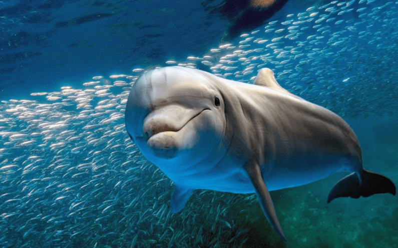 Datos curiosos sobre el mundo de los delfines - Dolphin Discovery ...