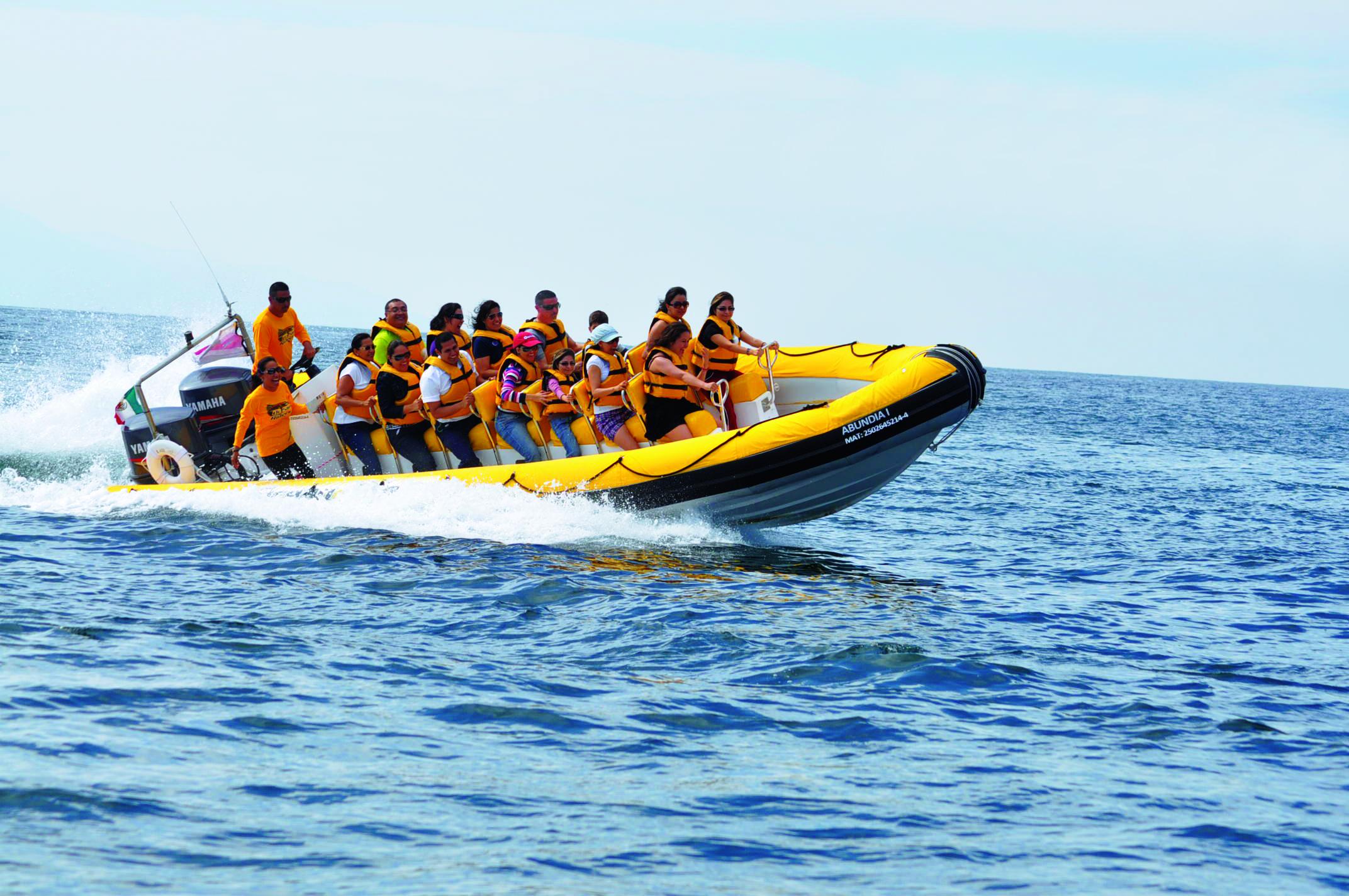 Los Cabos   Nadar con Delfines